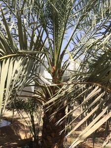 agri palm (10)