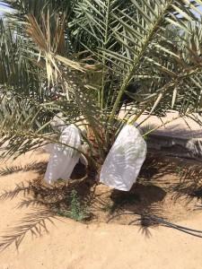 agri palm (13)