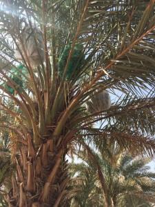 agri palm (16)