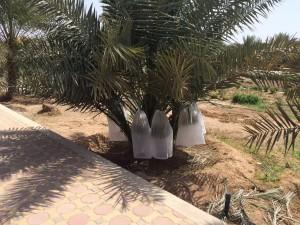 agri palm (20)