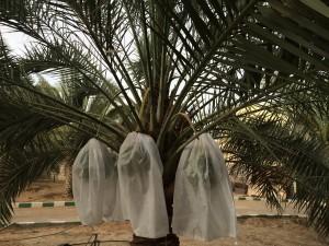 agri palm (3)