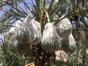 agri palm (5)